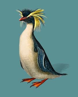 Pinguino di rockhopper (eudyptes chrysocome) illustrato da charles dessalines d'orbigny (1806-1876).