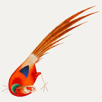 Pittura cinese di un uccello.