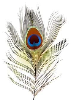 Piuma del pavone di realistick su fondo bianco.