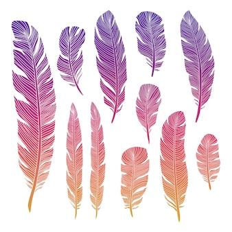 Piuma di uccelli colorati