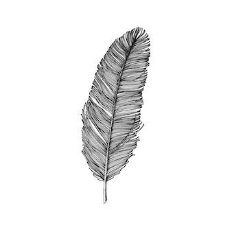 Piuma disegnata a mano isolato su sfondo bianco