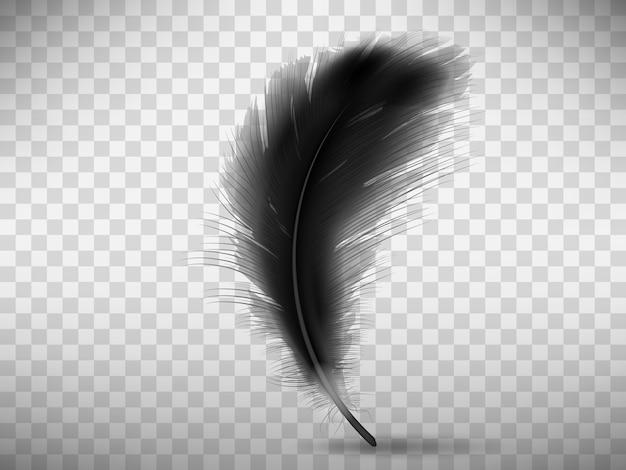 Piuma nera soffice con ombra realistica