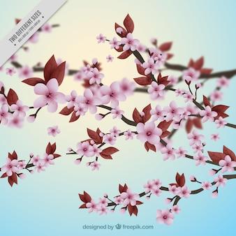Piuttosto sfondo con fiori di ciliegio realistici