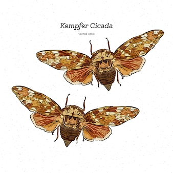 Platypleura kaempferi cicala illustrazione