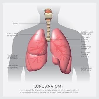 Polmone con illustrazione di dettaglio