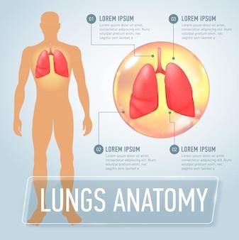 Polmone. infografica medica moderna. organi interni in un corpo umano. anatomia delle persone