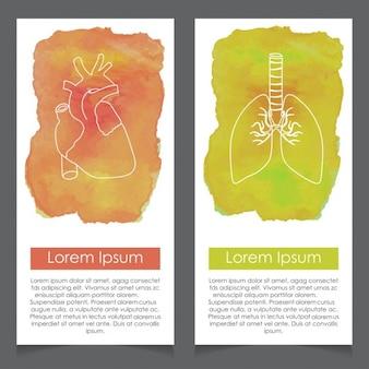 Polmoni e cuore del modello della carta acquerello
