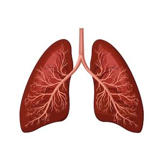 Polmoni umani