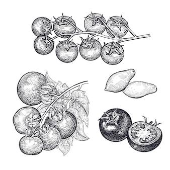 Pomodori isolati