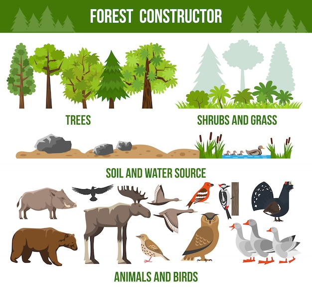 Poster del costruttore forestale