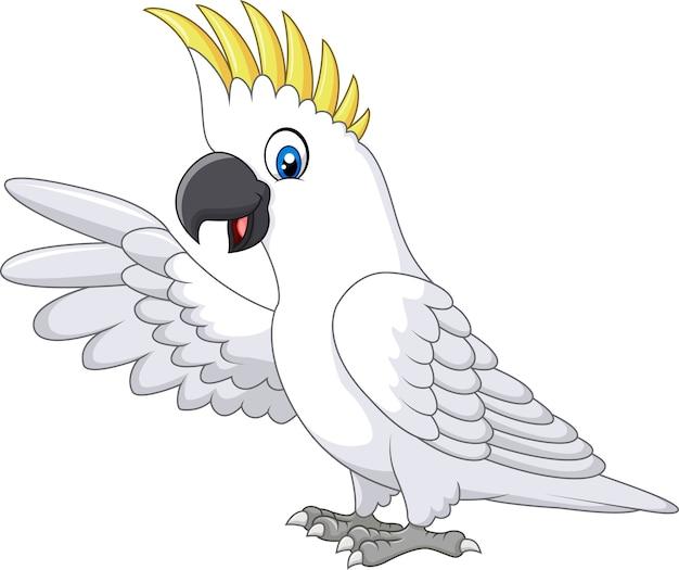 Presentazione bianca sveglia del pappagallo isolata su fondo bianco