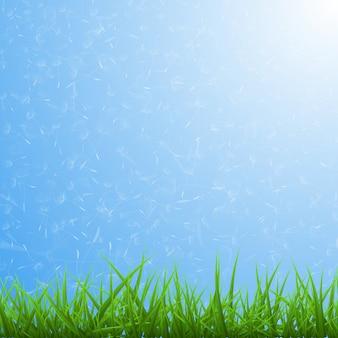 Primavera sfondo blu con erba verde e denti di leone