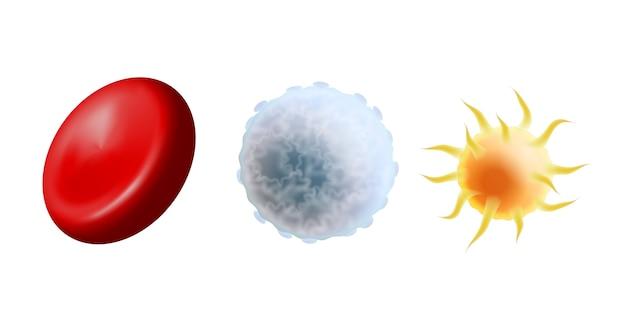 Principali cellule del sangue in scala: eritrociti, trombociti e leucociti. globuli rossi, globuli bianchi e piastrine su sfondo bianco. illustrazione