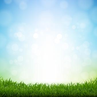 Priorità bassa bianca del bordo dell'erba verde
