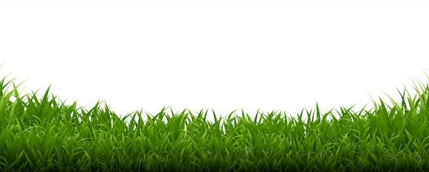 Priorità bassa di bianco della struttura dell'erba verde