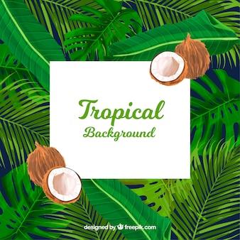 Priorità bassa di estate tropicale con piante e noci di cocco