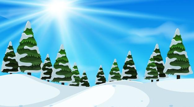Priorità bassa di paesaggio con neve sugli alberi