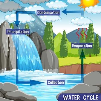 Processo del ciclo dell'acqua sulla terra - scientifico