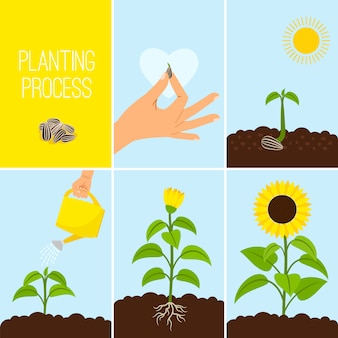 Processo di semina dei fiori
