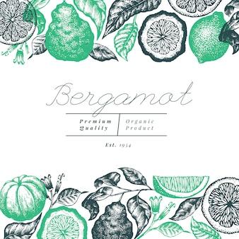 Progettazione del fondo del ramo di bergamotto. cornice di lime kaffir. disegnato a mano. agrumi retrò stile inciso