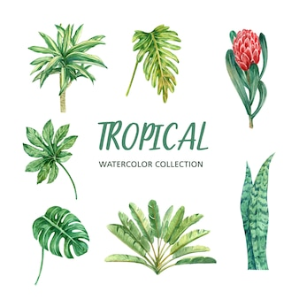 Progettazione dell'acquerello dell'elemento con la pianta tropicale, insieme dell'illustrazione di botanico.