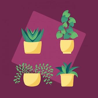 Progettazione di immagini piatte di piante decorative