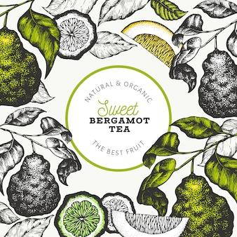 Progettazione di rami di bergamotto. cornice di lime kaffir. illustrazione disegnata a mano della frutta di vettore agrumi stile retrò.