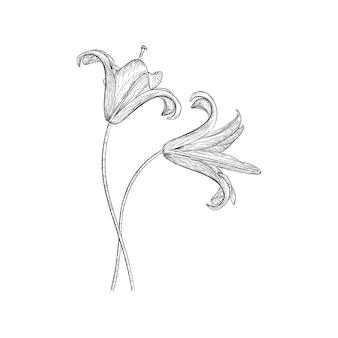 Progettazione di vettore dell'illustrazione del giglio