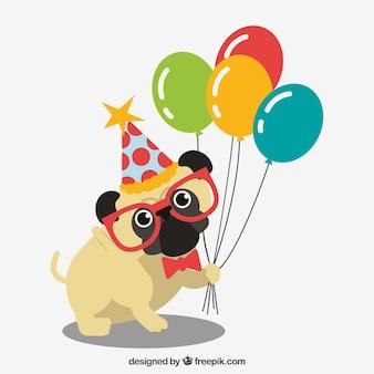 Pug divertente con gli elementi di compleanno