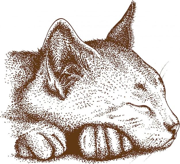 Puntinismo disegno di gatto