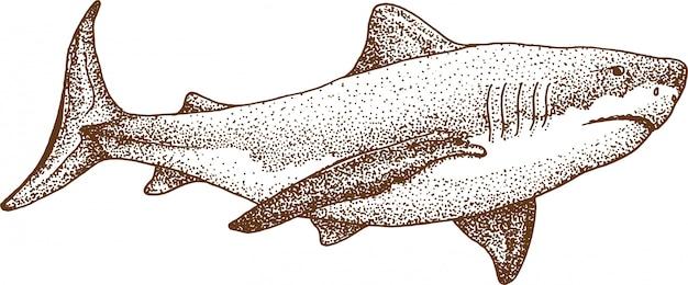 Puntinismo disegno di squalo