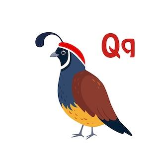 Quaglia. alfabeto divertente, animale