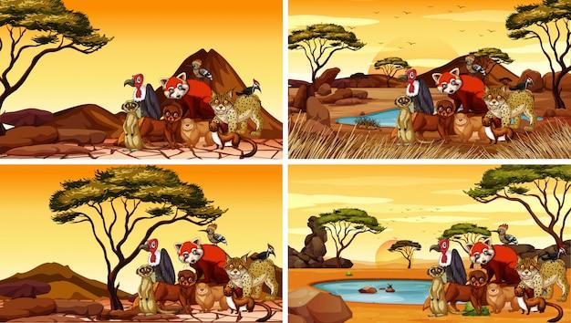Quattro scene con molti animali nel deserto