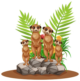 Quattro suricati in piedi sulla pietra