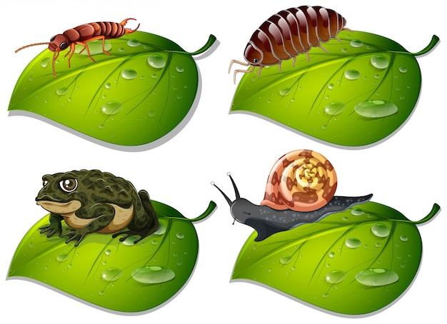 Quattro tipi di insetti su foglie verdi