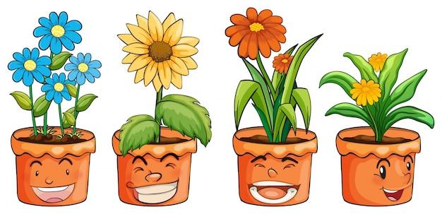 Quattro vasi di fiori