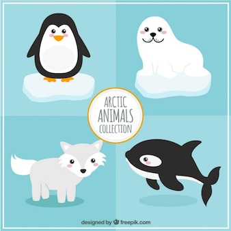 Raccolta animali artici
