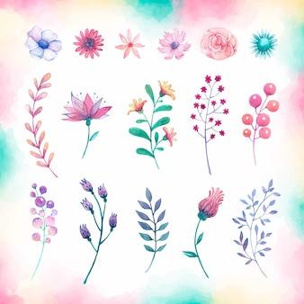 Raccolta dell'acquerello di fiori e foglie