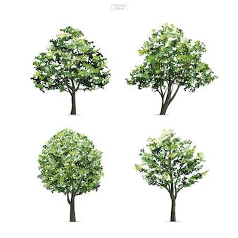 Raccolta di albero isolato su sfondo bianco.