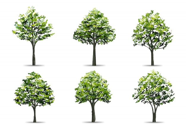 Raccolta di albero realistico isolato su sfondo bianco.
