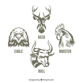 Raccolta di animali disegnati a mano