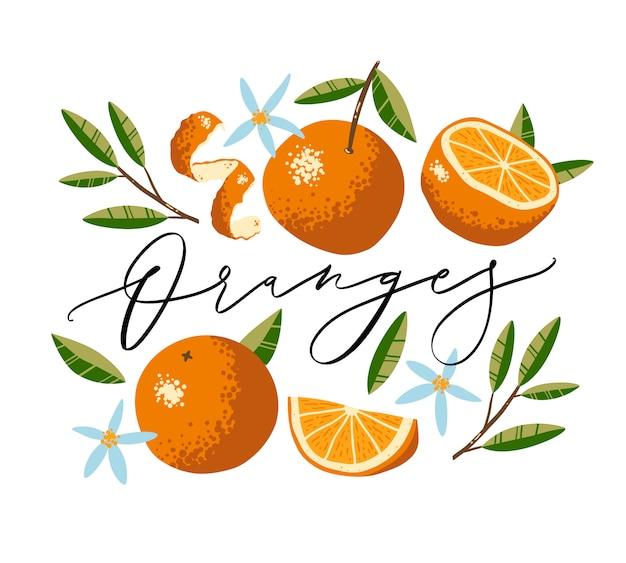 Raccolta di arance, fiori e foglie isolati su priorità bassa bianca. iscrizione calligrafica.