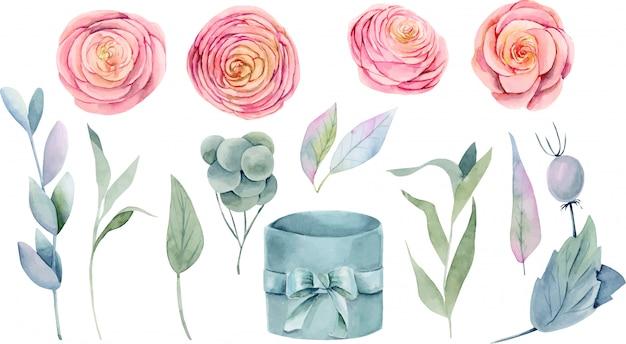 Raccolta di belle rose rosa dell'acquerello isolate, foglie verdi, rami e contenitore di regalo