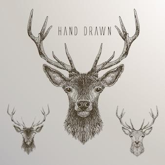 Raccolta di cervi disegnati a mano