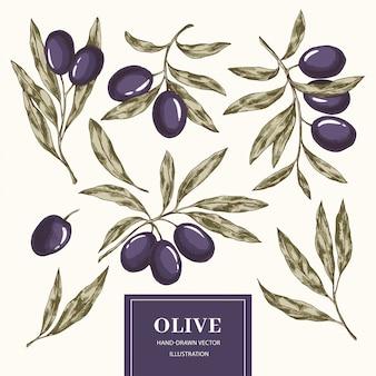 Raccolta di elementi di oliva