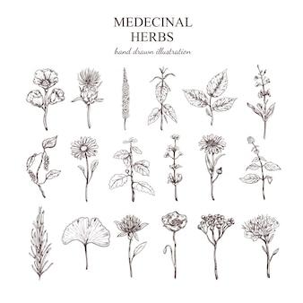 Raccolta di erbe mediche disegnata a mano