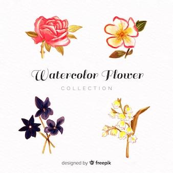 Raccolta di fiori ad acquerello