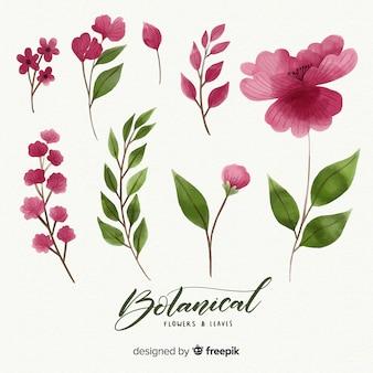 Raccolta di fiori e foglie botanici
