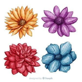 Raccolta di fiori e foglie colorate dell'acquerello