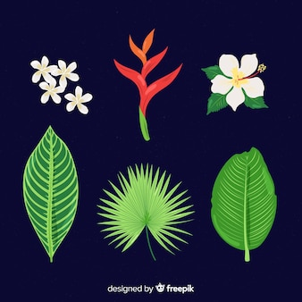 Raccolta di fiori e foglie tropicali